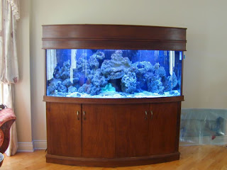 aquarium furniture stands