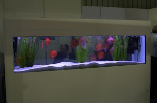 beautiful Aquarium fish tanks