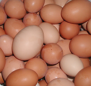 photo of many eggs on shades of brown