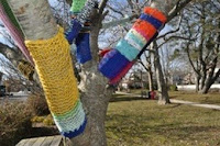 tree branches with multicolored knitted sleeves on them
