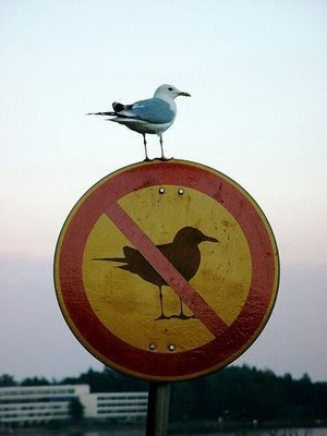 seagull sitting on sign that says no seagulls