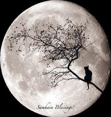 silhouette of cat on branch against moon