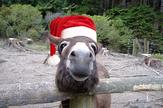 donkey with Santa hat