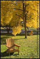 Adirondack chair in lawn under trees with fall colors of reds and browns