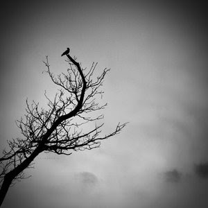 bird at the top of naked tree branch against Grey sky