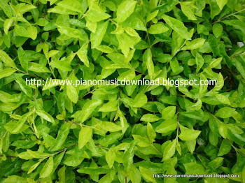 Green leaves photos