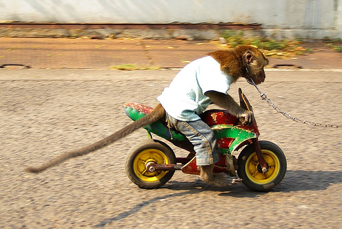 Funny+Monkey+on+bike.jpg (400×268)