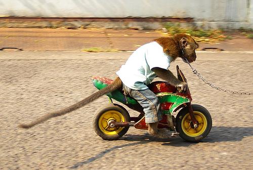 Funny+Monkey+on+bike.jpg (400×268)