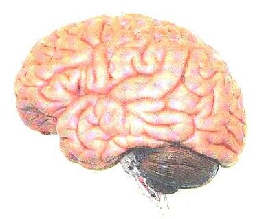 5 Hal unik tentang otak manusia