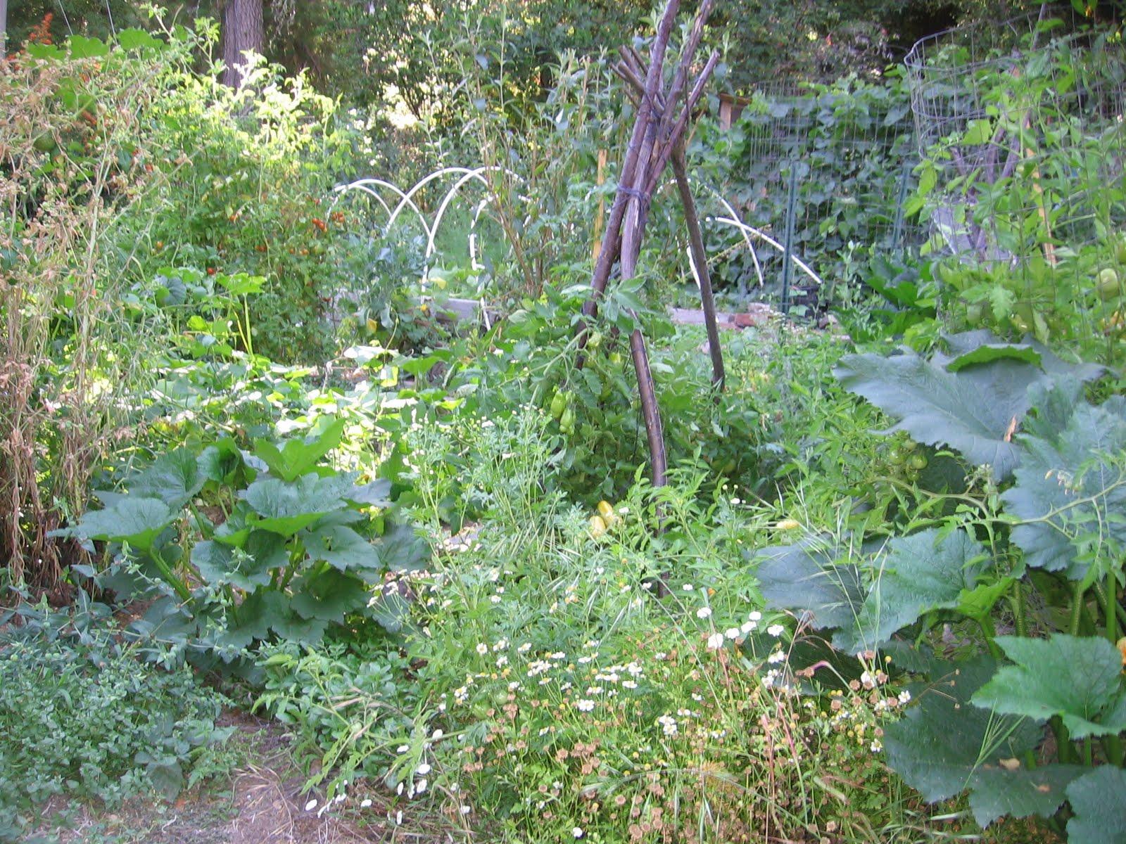 A Positively Messy Garden