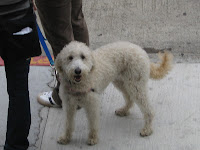 San Francisco Bay to Breakers 2010 - Dog