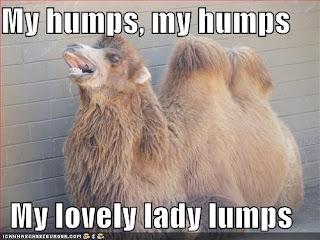 Funny Hilarious Dirty Jokes - Funny Camel