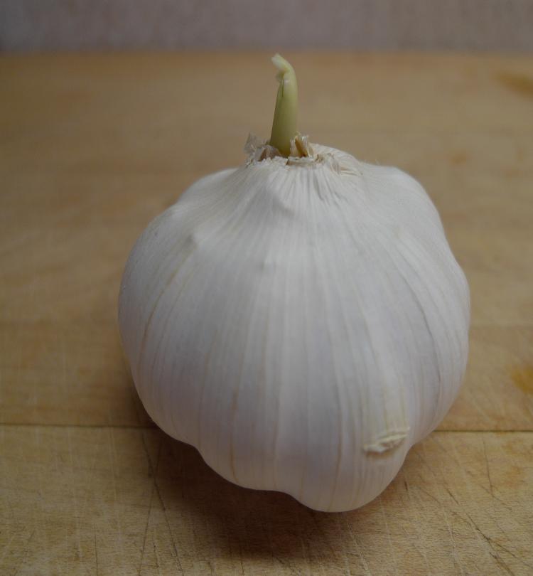 [garlic.JPG]