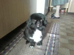Kira, il mio cane