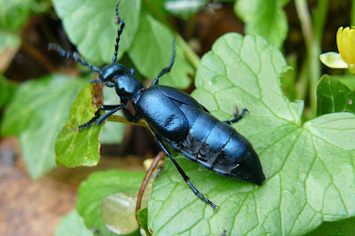 beetle onderdeel pa