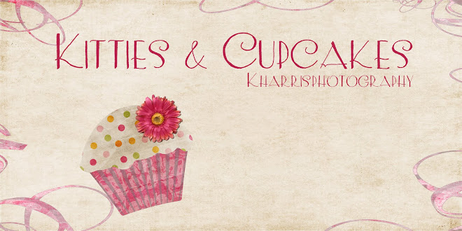 Kitties & Cupcakes