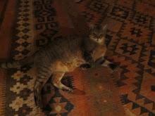 Katty's Cat