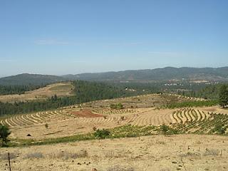 Renaissance vineyards - looking down on semillon and syrah