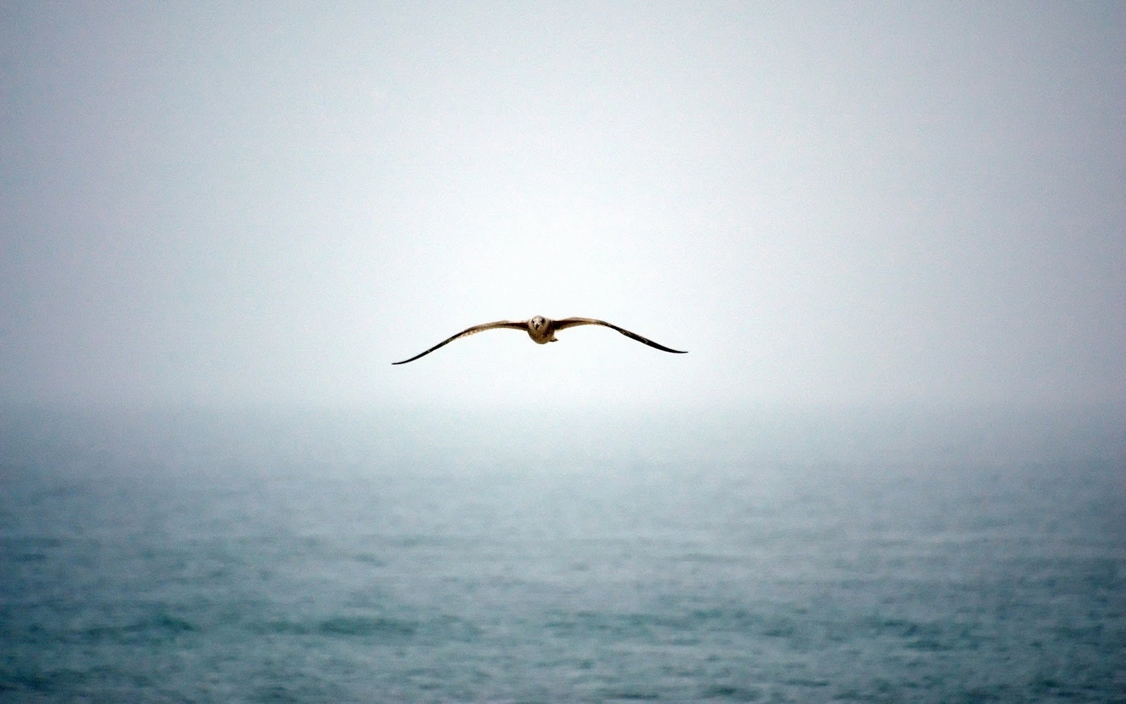 http://1.bp.blogspot.com/_JUeF8tYbiVw/TQivwEhJW2I/AAAAAAAAB18/f2hvHJhuxBs/s1600/flying-bird.jpg