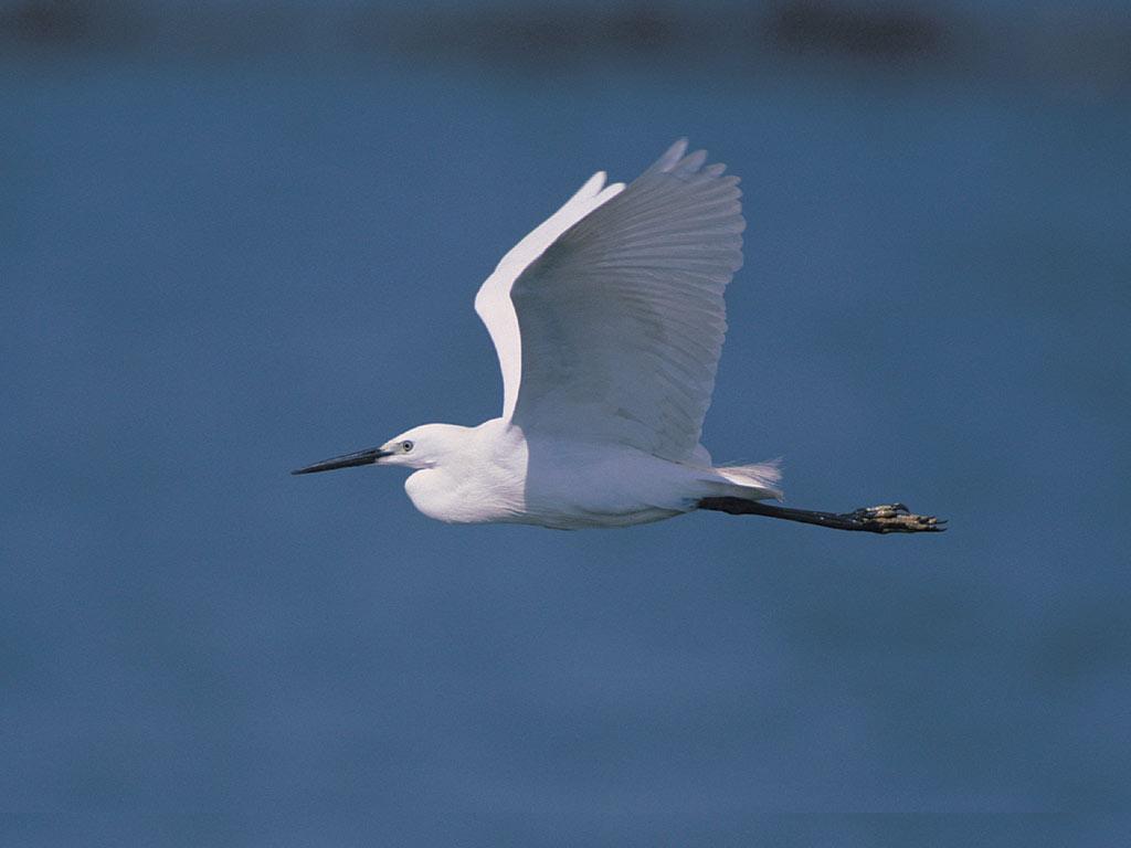 http://1.bp.blogspot.com/_JUeF8tYbiVw/TQiwbTJW5ZI/AAAAAAAAB2A/I8Oz_kLSEv8/s1600/flying-stork.jpg