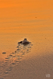 chris martin photography _turtles 11