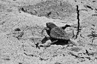 chris martin photography _turtles 9