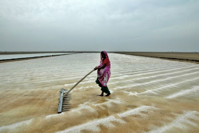 salt is produce at the sea shore