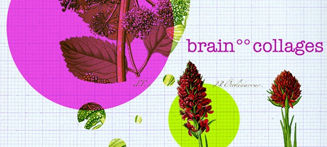 brain°°collages