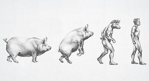 Evolusi forex