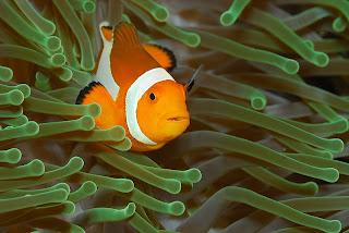 Amazing Underwater Photography Giambattista Isabella