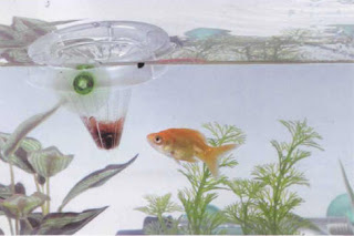 Fresh water aquarium fish feeding tropical fish live for Live fish food