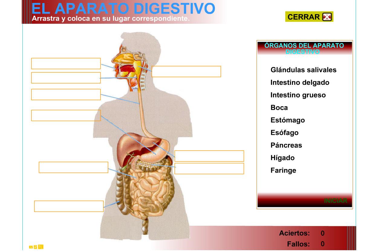 diegonuevastecnologias: Aparato digestivo