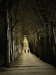 Tu elijes si caminar solo o acompañado ,