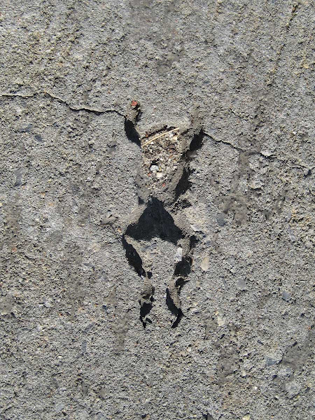 Raining Frogs - (Like in the movie Magnolia.) A frog fossil on the sidewalk at Norman & Banker in Greenpoint.