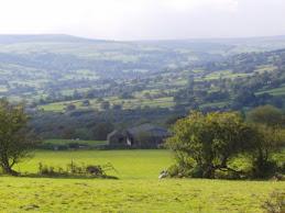 A greenygrey habitat