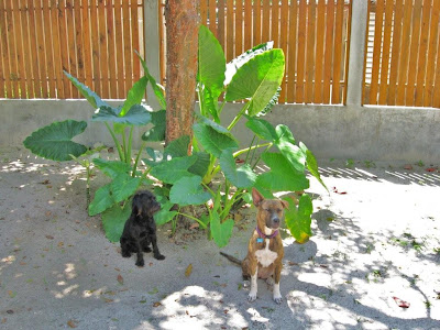 Exploring Belize Continues: How Does Our Garden Grow?