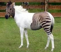 Kuda3