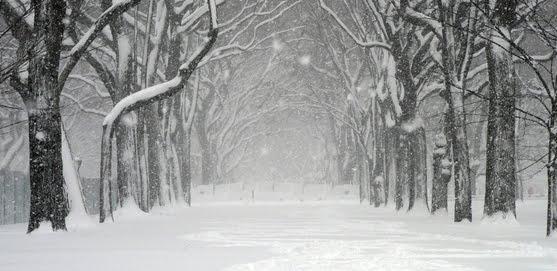 Beauty of Winter by Tim Žibrat