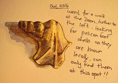 a watercolour of a pelicans foot sea shell by ruthie