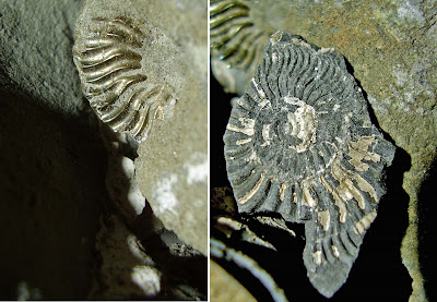 fossils at flodiggary bay