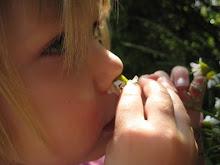 Scent of Chamomile mmm