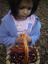 Aysha's Harvest