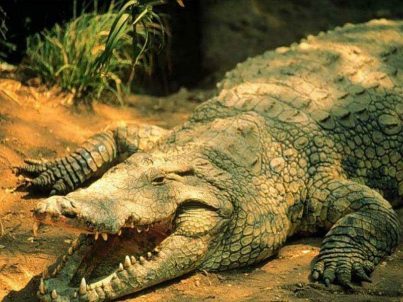 Miriam Rivera: Los Reptiles!