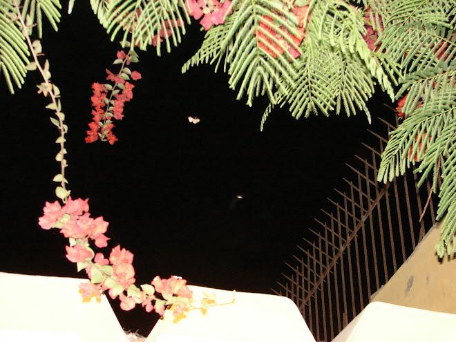 Avistamiento Ovni ET ´´MARIPOSA´´ de Luz 09/01/2010 hrs:02:20:08 am sec