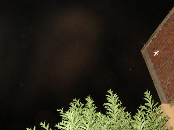 Avistamiento Ovni ''PICAFLOR'' 28/enero/2010 en pared ladrillo ''apunta hacia Nibiru y sus formas