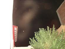 Ultimos Avistamientos Ovni Alien felino 3/febrero/2010