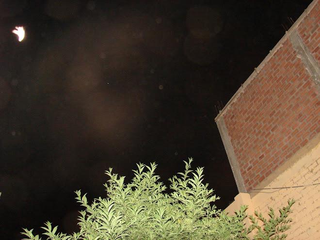 11-12-13 febrero,Ultimo Avistamiento,hoy hrs:9:33pm,''PALOMA LUZ'' reta a  Alien,x Rodolfo Trujillo