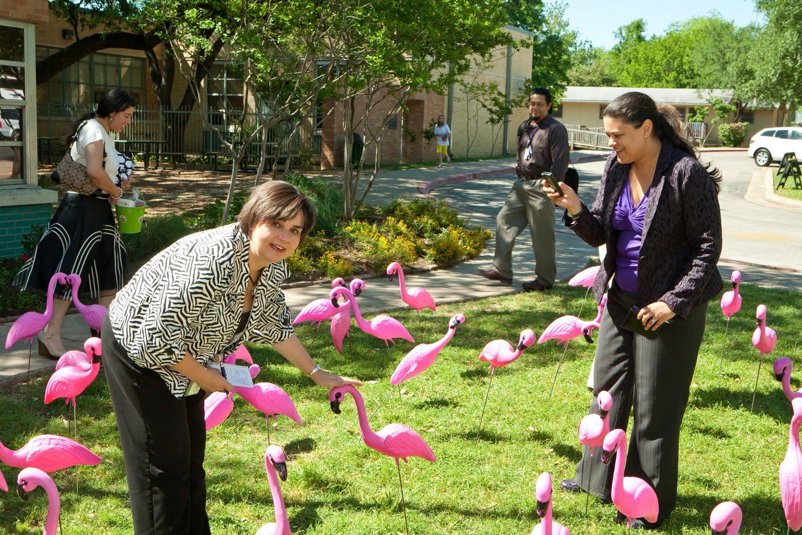 http://1.bp.blogspot.com/_Je61dAhO05U/S_G7a3XiI8I/AAAAAAAAAtI/wIjRyEHHgAI/s1600/Bryker+flamingos+with+Dr+C.jpg