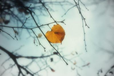 листик, сердце