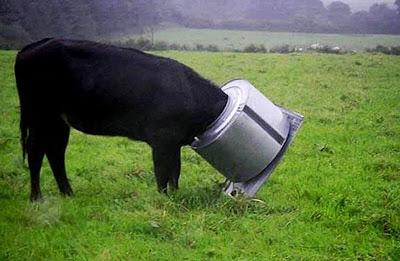 корова в барабане стиральной машины